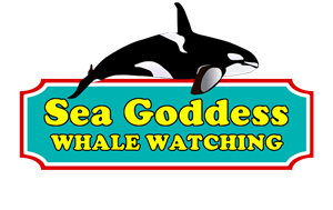 seagodess_logo